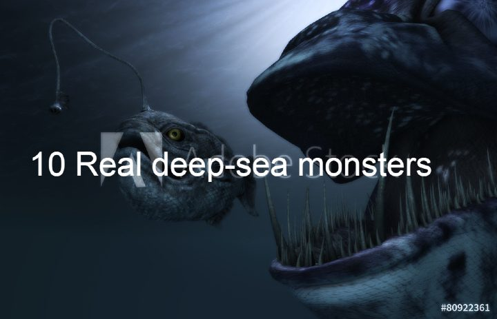 10-Real-deep-sea-monsters