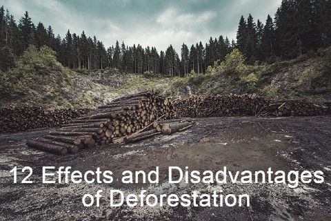 12 Effects and Disadvantages of Deforestation