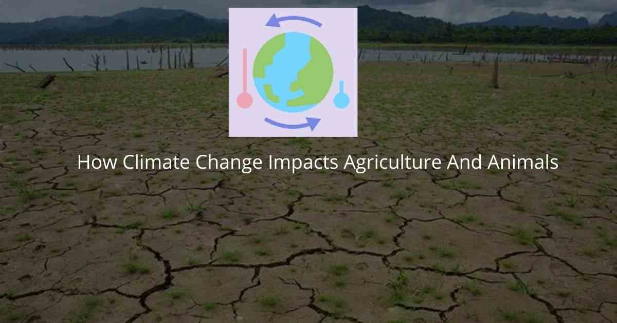 How Climate Change Impacts Agriculture And Animals