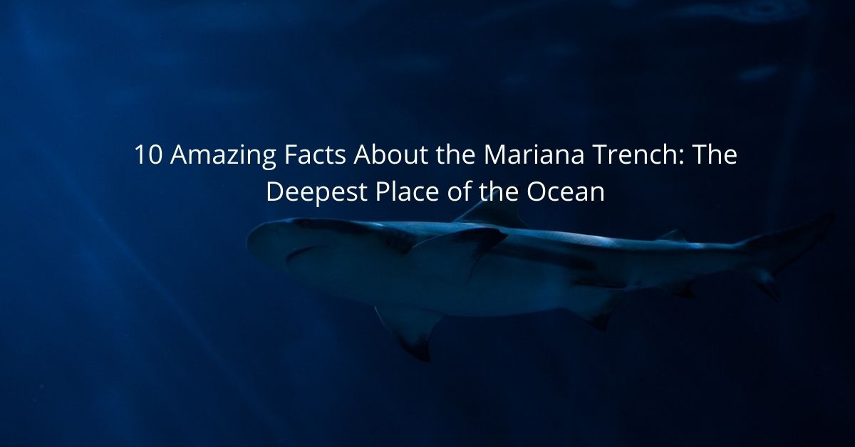10 Amazing Facts About the Mariana Trench: The Deepest Place of the Ocean