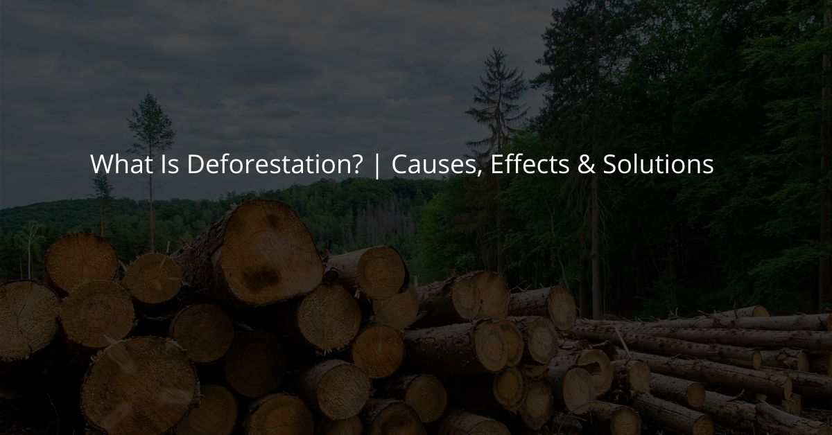 What Is Deforestation? | Causes, Effects & Solutions