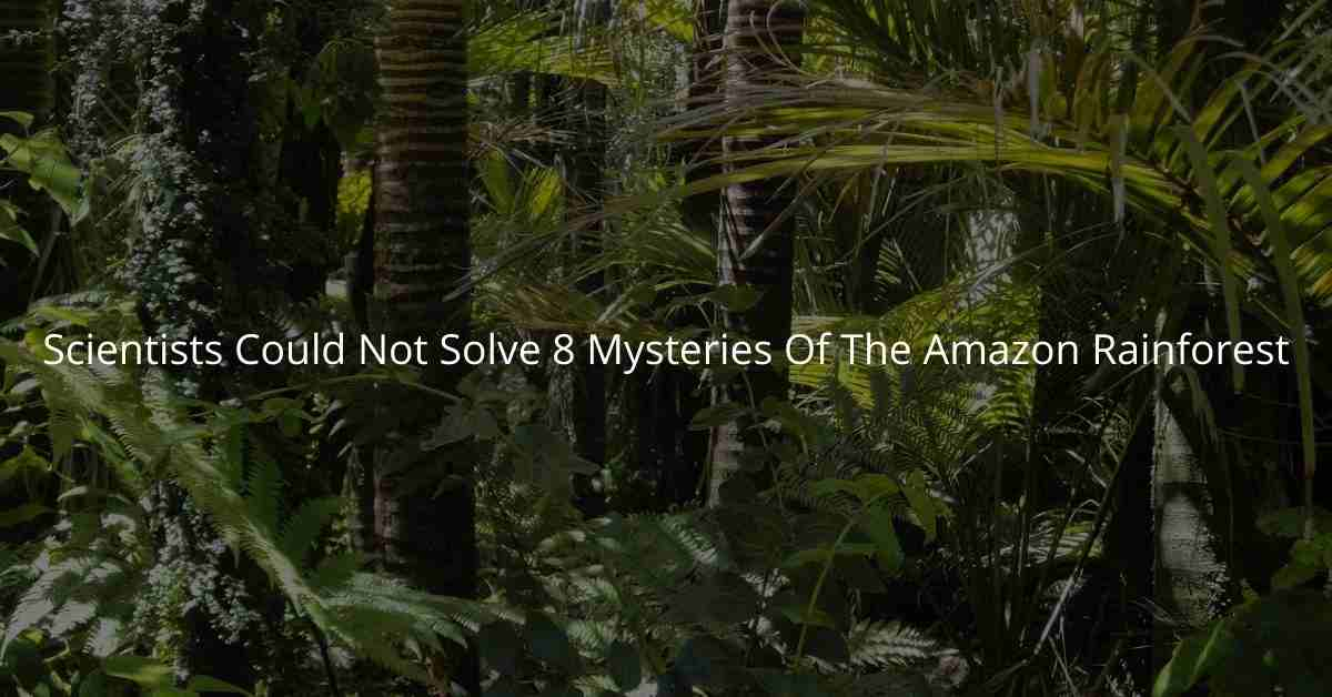 Scientists could not solve 8 mysteries of the Amazon Rainforest